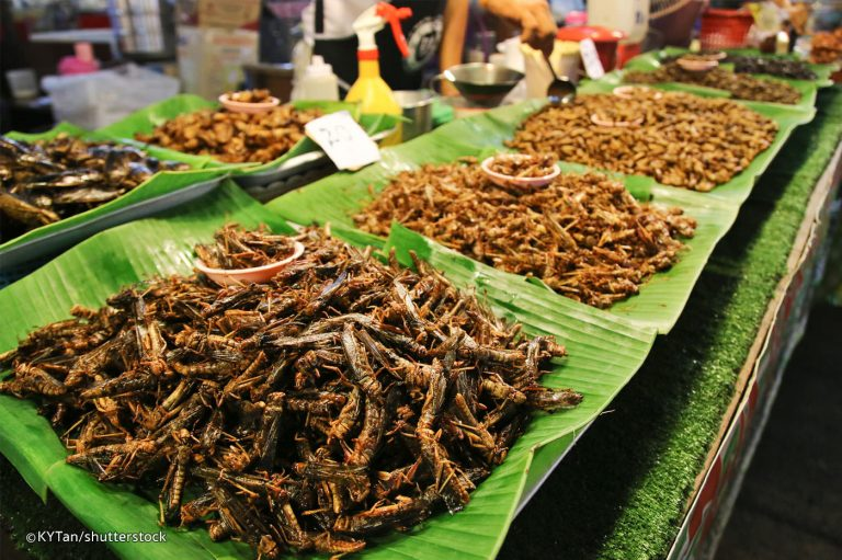 Fried Insects, Phuket, Thailand