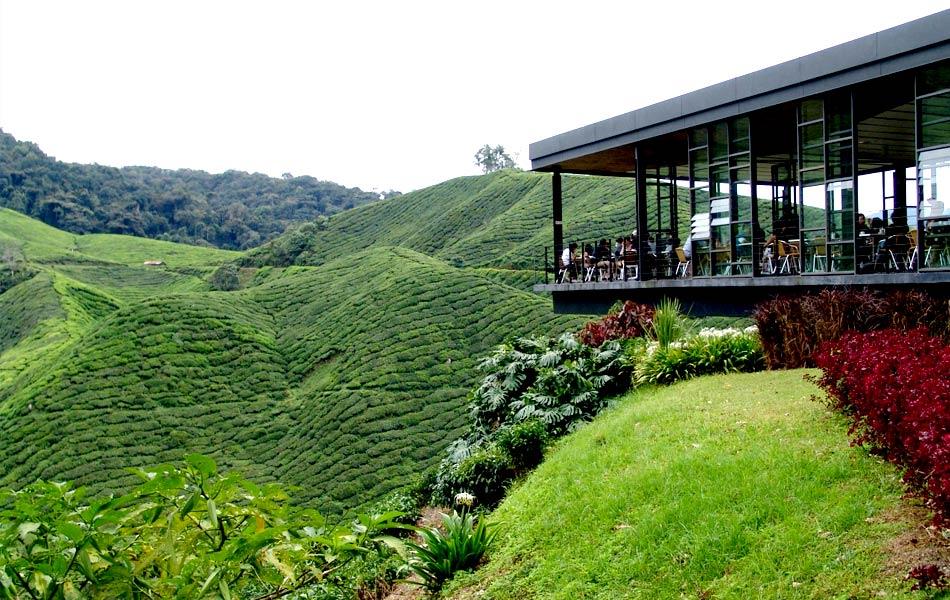 BOH Tea Plantations for Malaysia holiday