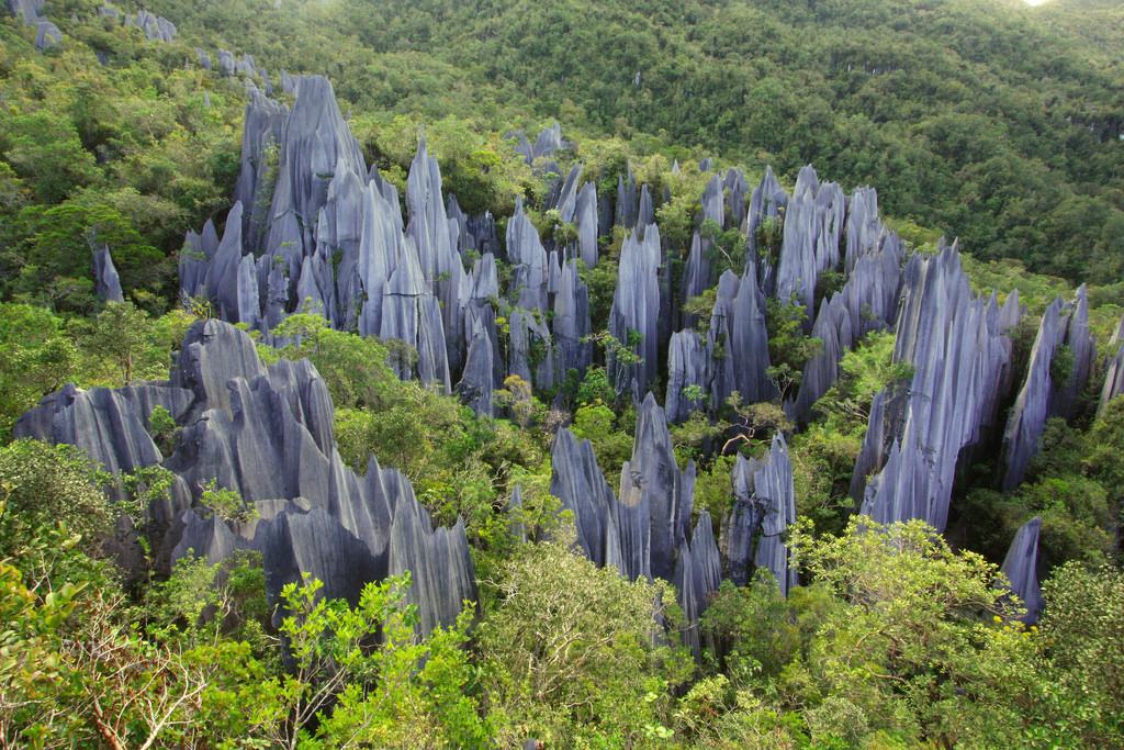 Pinnacles Trail, Gunung Mulu National Park for Malaysia holiday